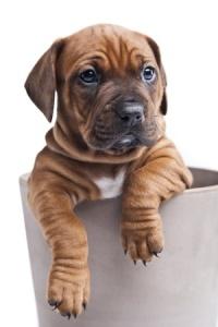 happy alkaline puppy